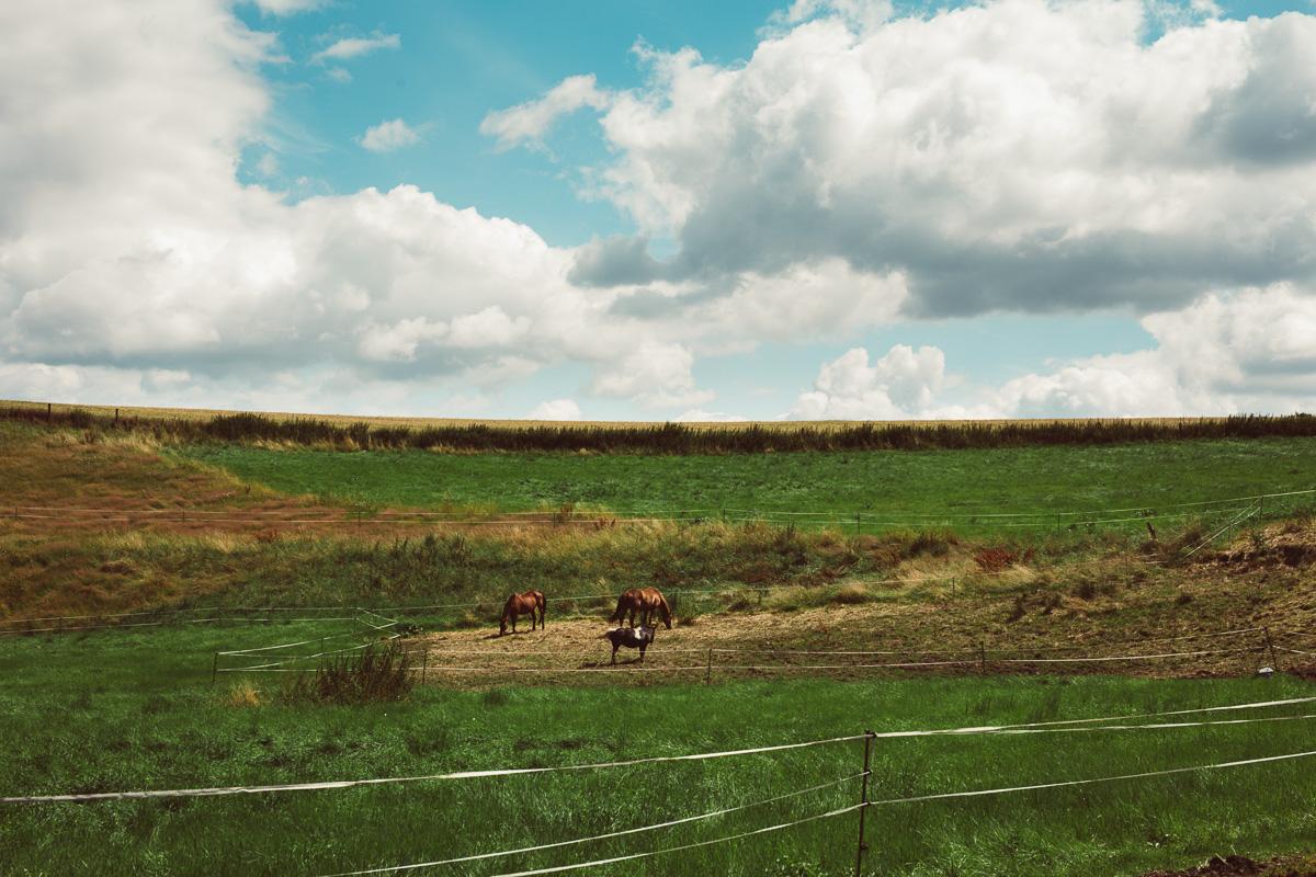 Fotoshooting - Elisabeth und Pferd-107