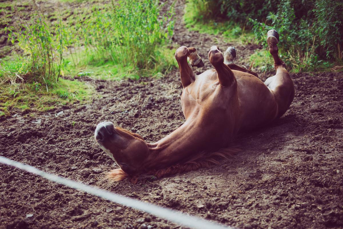 Fotoshooting - Elisabeth und Pferd-65