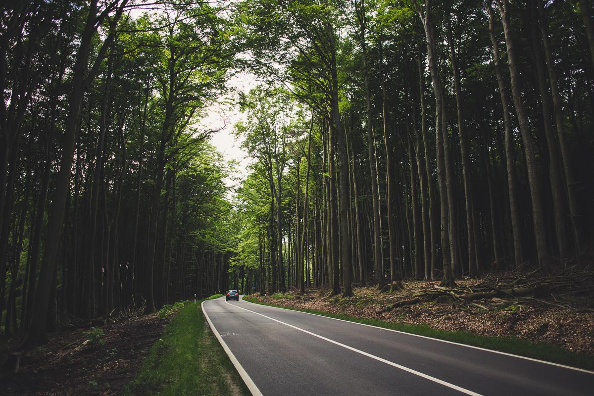 Waldlichtung mit Straße