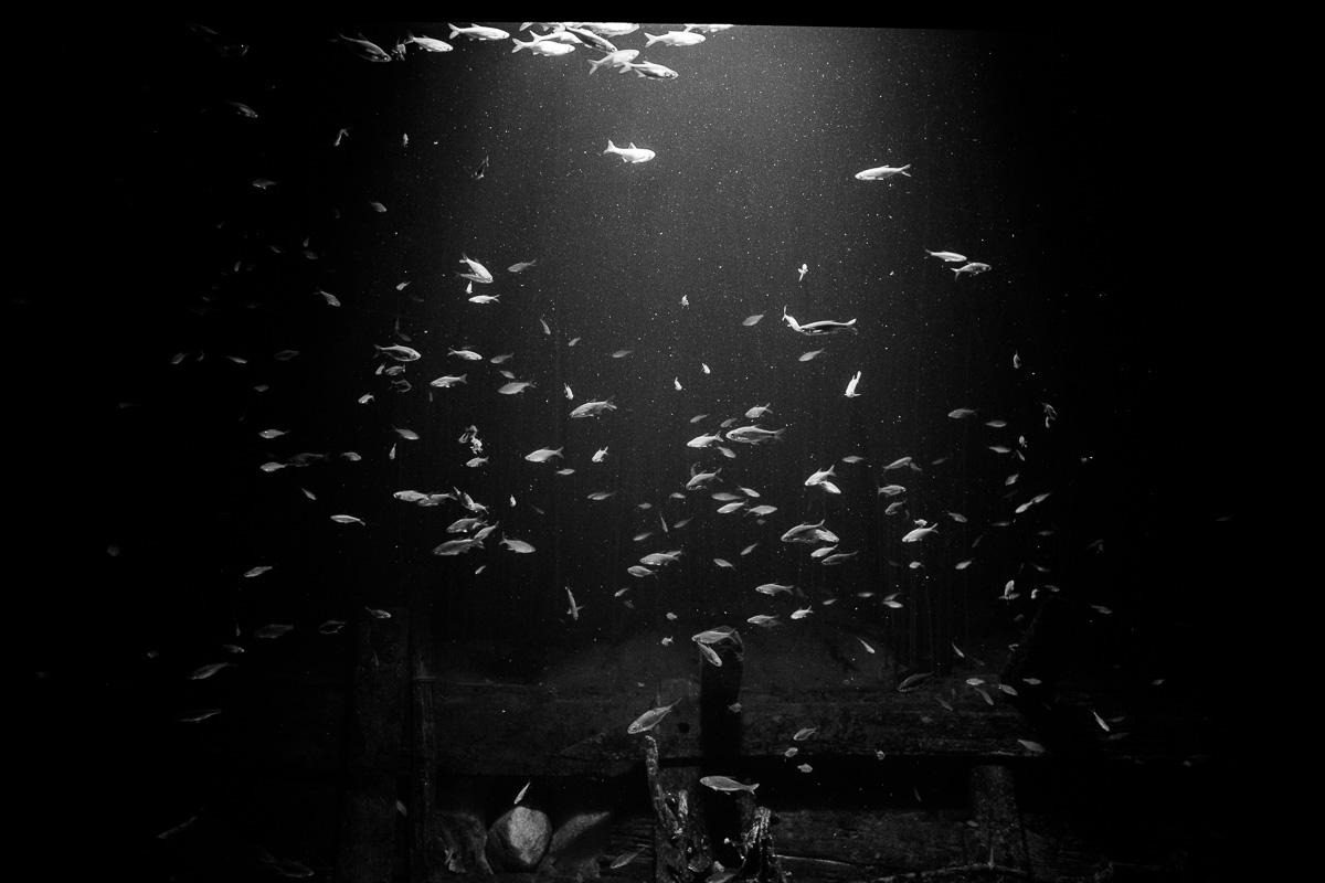 Fischbecken in Schwarzweiss