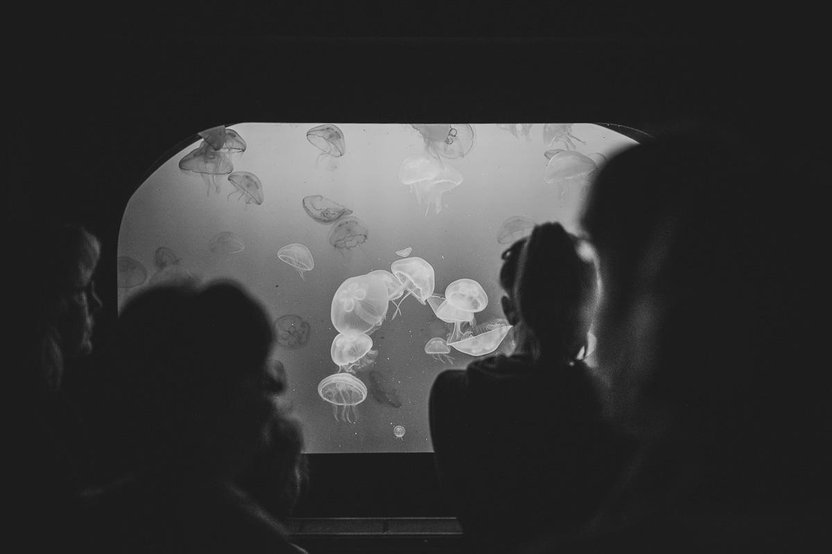 Quallen im Ozeaneum Stralsund