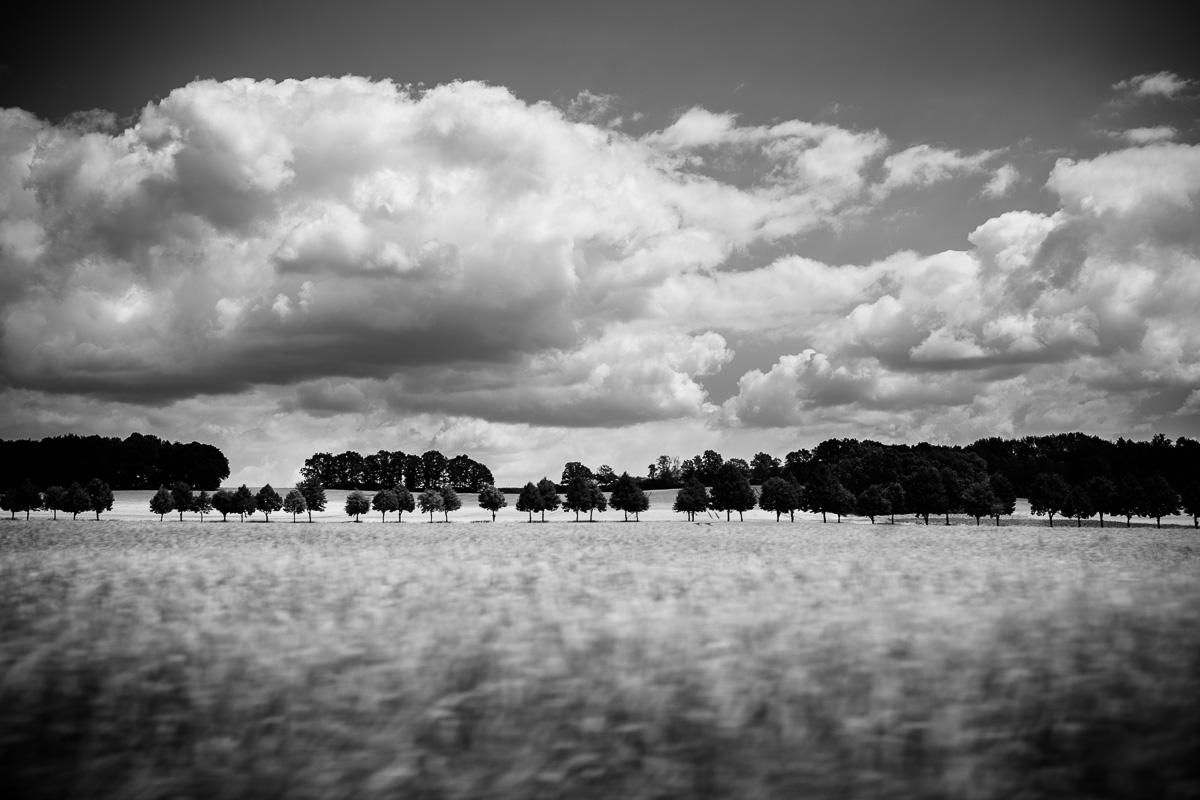 Baumallee unter mächten Wolken in Schwarzweiss