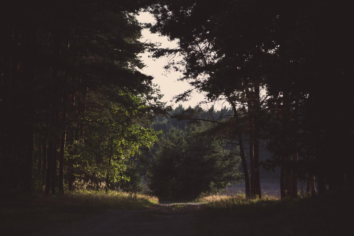 Bäume auf dem Galgenberg Wittichenau