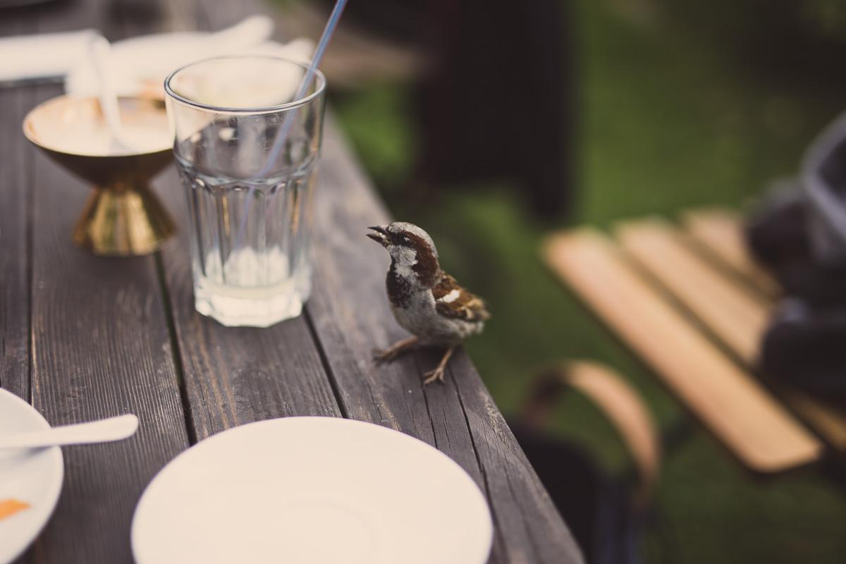 Ein Spatz sitzt auf dem Kaffetisch