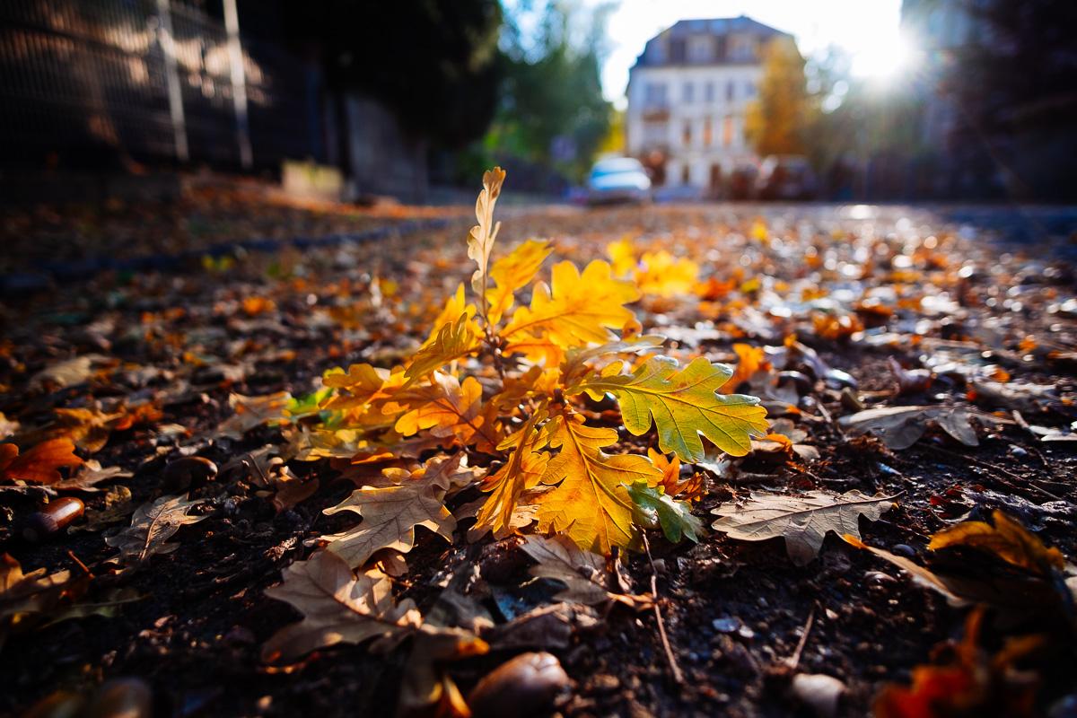Ein Laubblatt liegt auf der Straße in Blasewitz