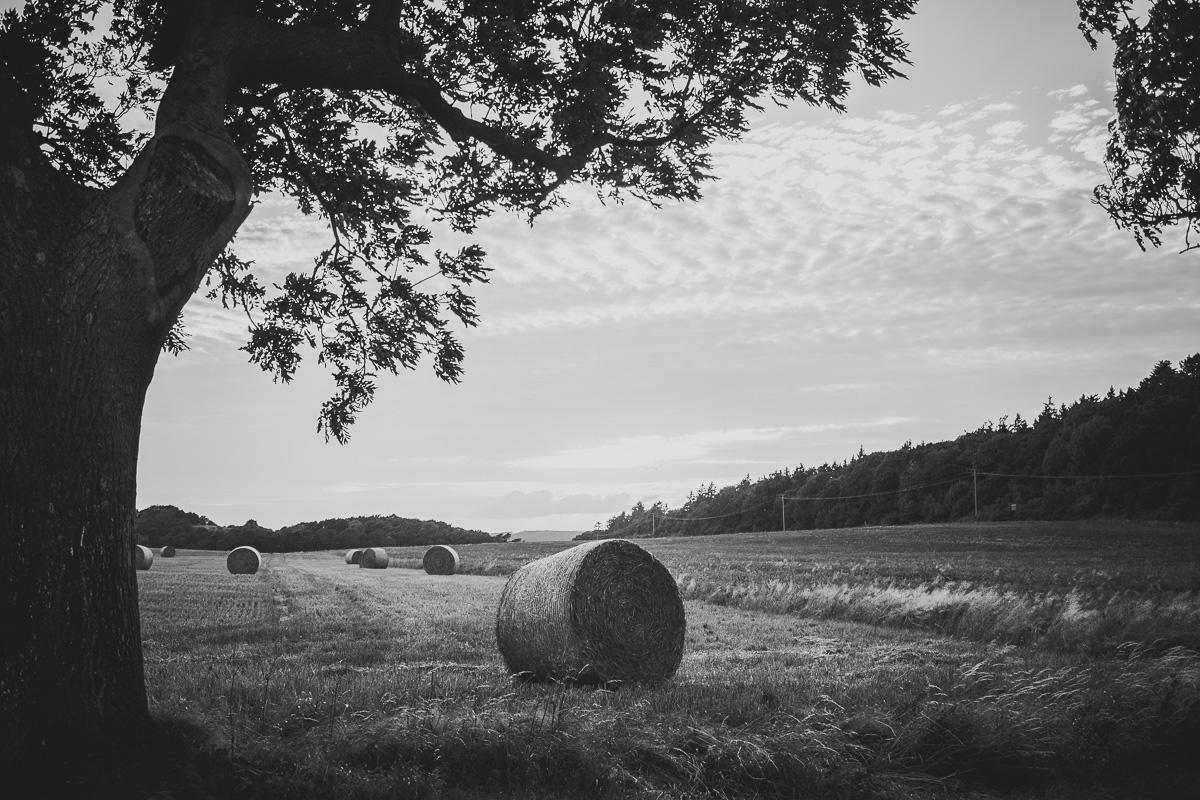 Strohrollen liegt auf einem Feld