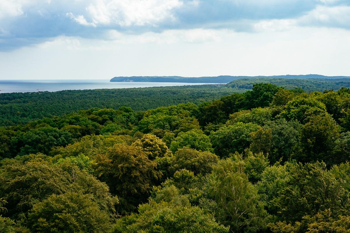 Wald auf Rügen von oben