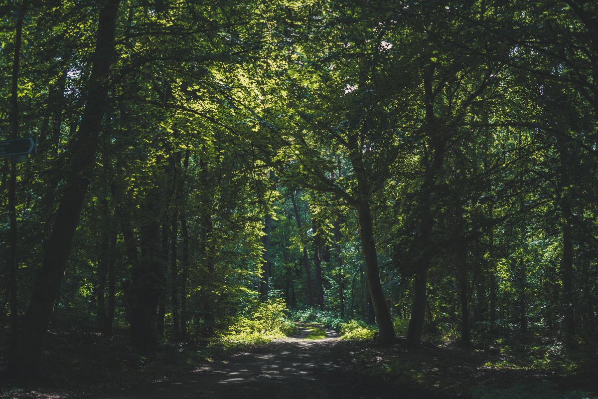 Sonnenschein fällt auf Bäume