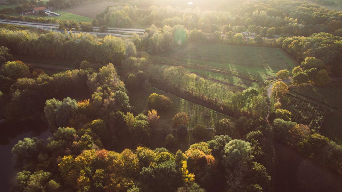 Sonnenschein fällt auf Herbstbäume
