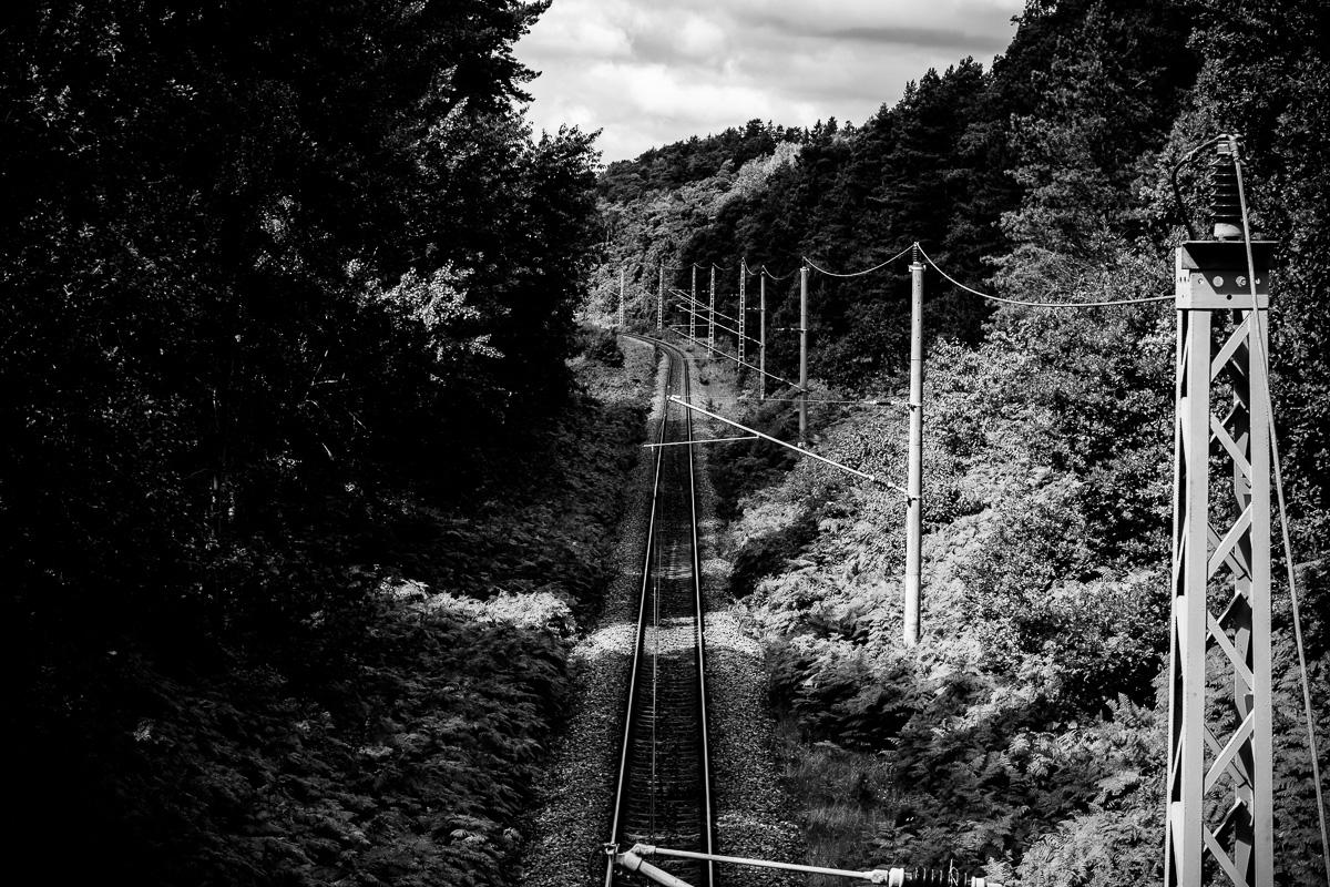 Bahngleise die durch den Wald führen