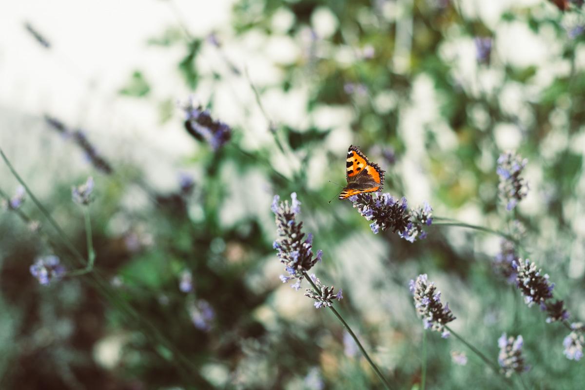 Ein Schmetterling sitzt auf einer Blume