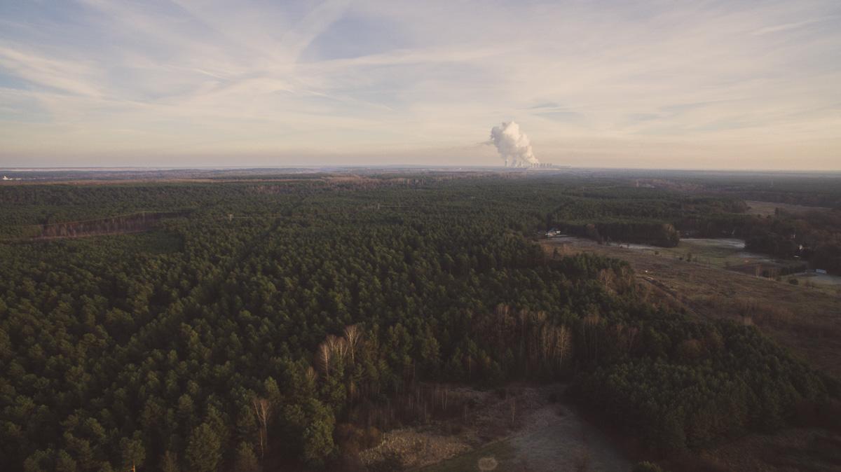 Großer Nadelwald, im Hintergrund das Kraftwerk schwarze Pumpe