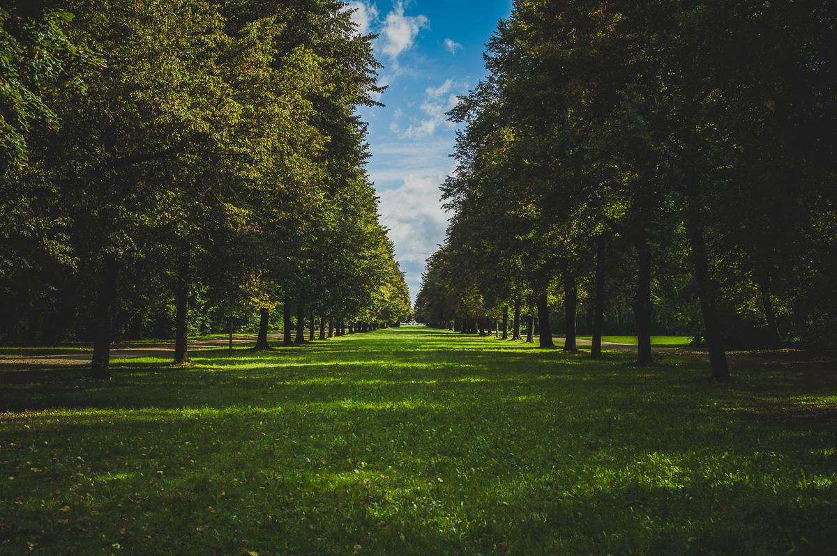 Baumallee im Großen Garten Dresden
