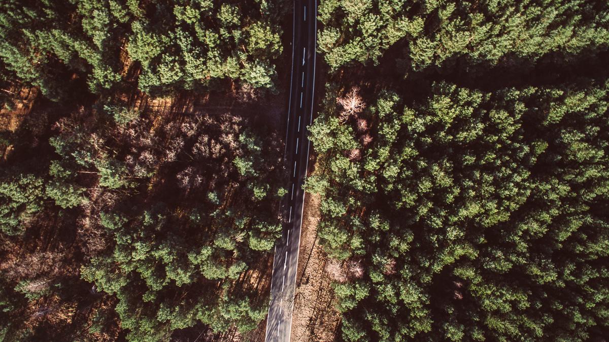 eine Straße führt durch einen Nadelwald, fotografiert aus der Luft