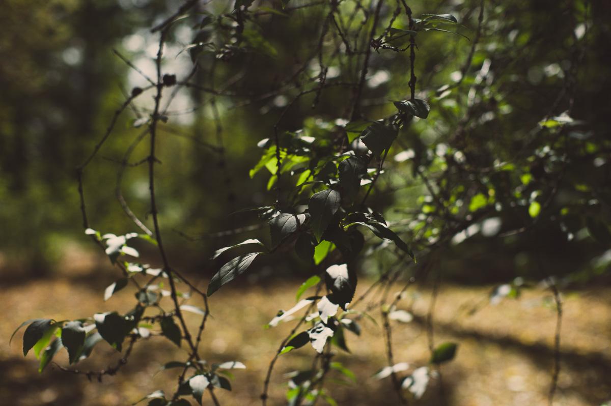 Blätter werden von der Sonne Beschienen