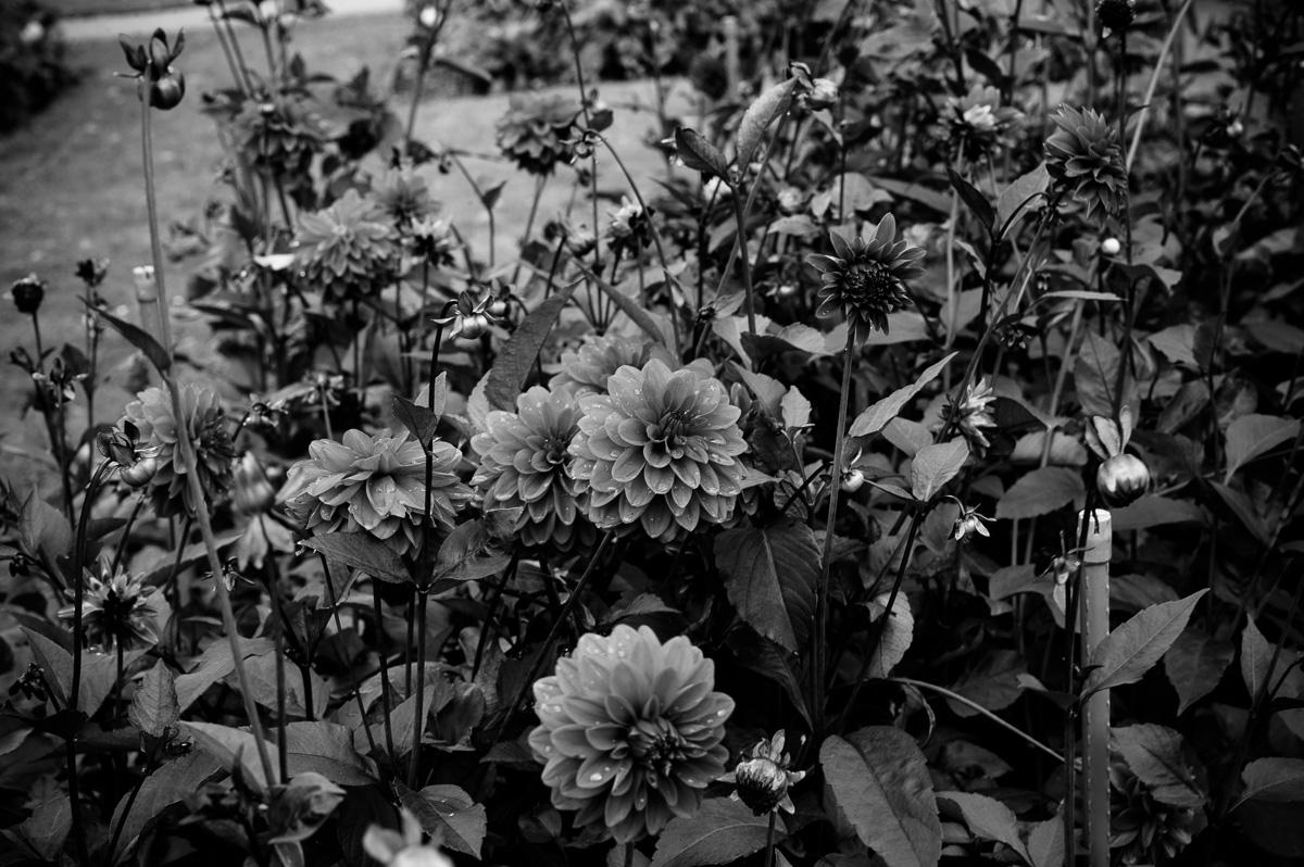 Blumen mit abperlenden Wassertropfen