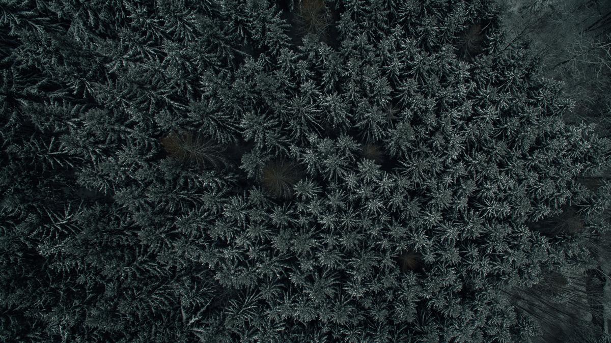 Gefrohrener Nadelwald von oben