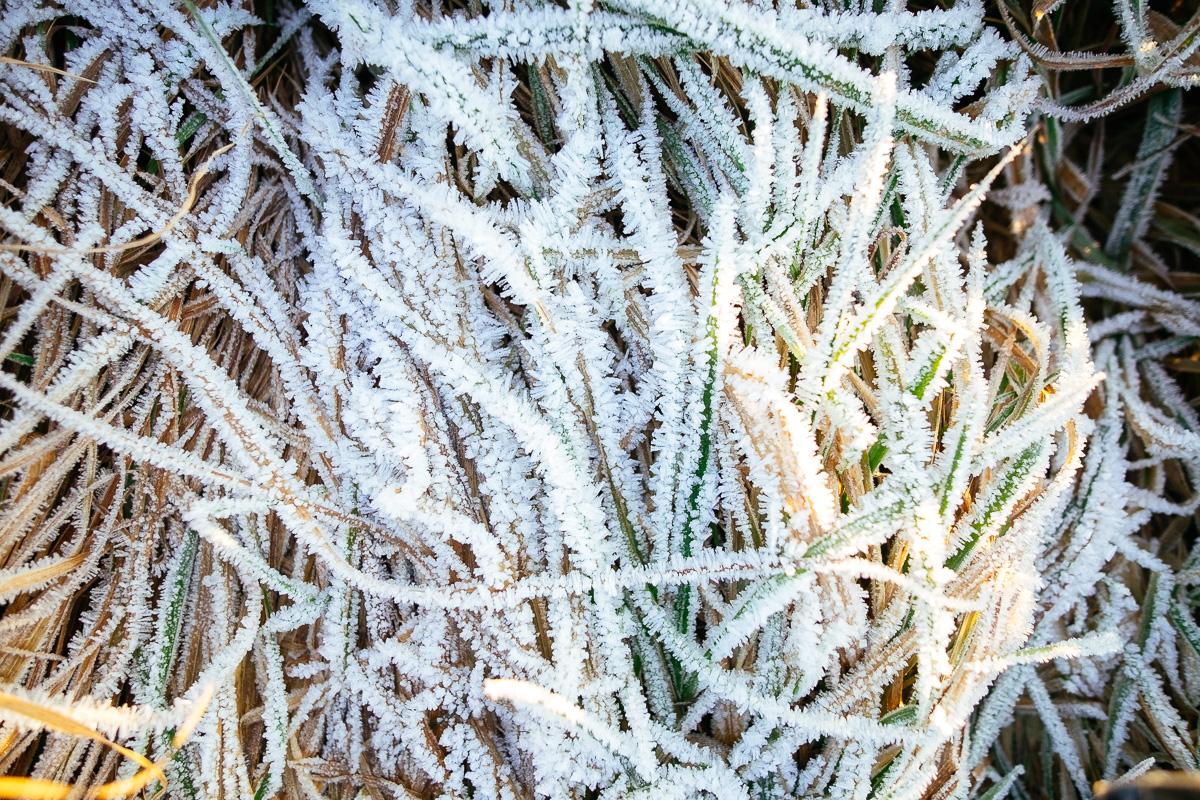 Gefrohrenes Gras mit Eiskristallen