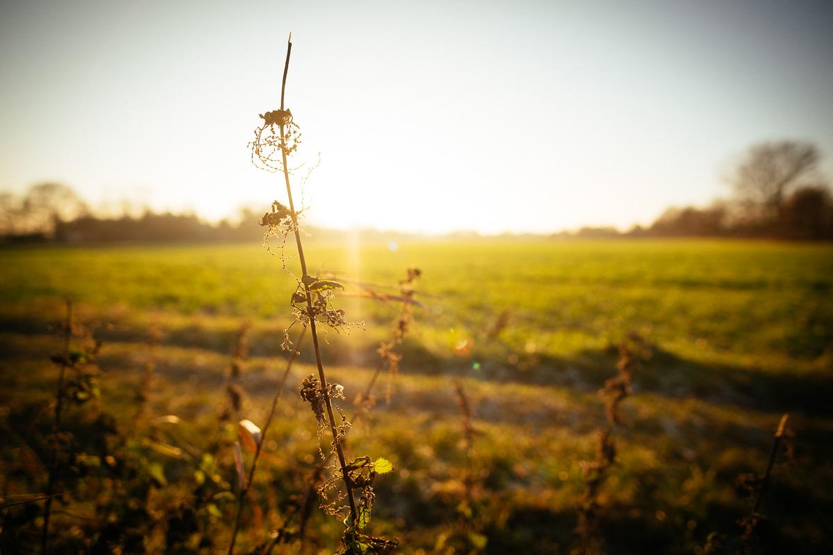 Pflanze vor Gegenlicht der Sonne