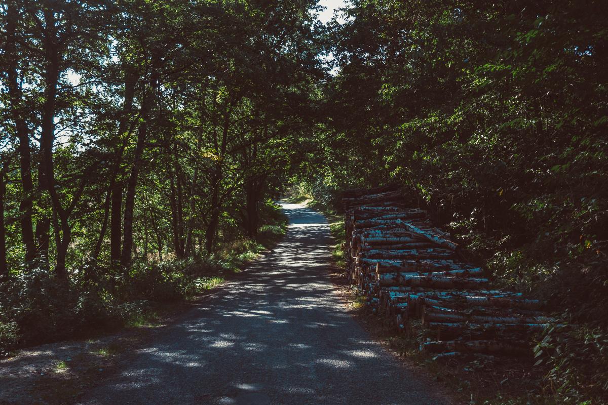 Feldweg mit Holzstapel am Wegesrand
