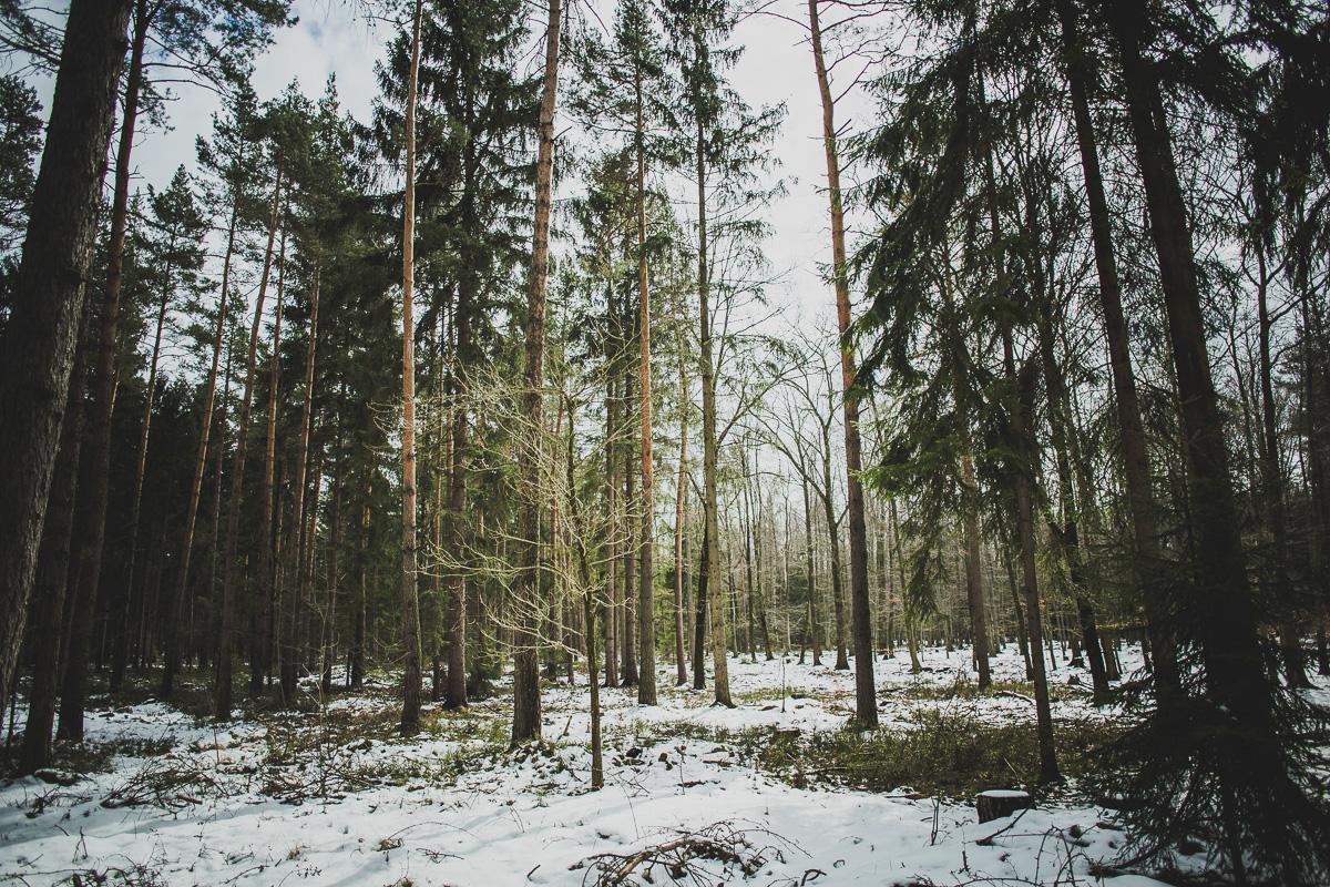 Nadelwald mit Schneeresten