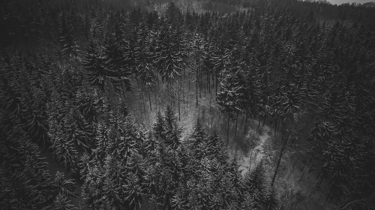 Teils kahle Nadelbäume mit Schnee bedeckt