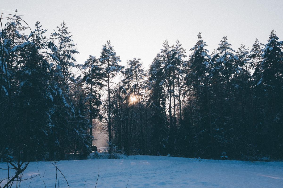 Sonnenschein bricht durch die Bäume in der Dresdener Heide