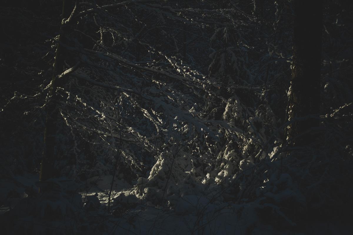 Schattenspiel im Winterwald