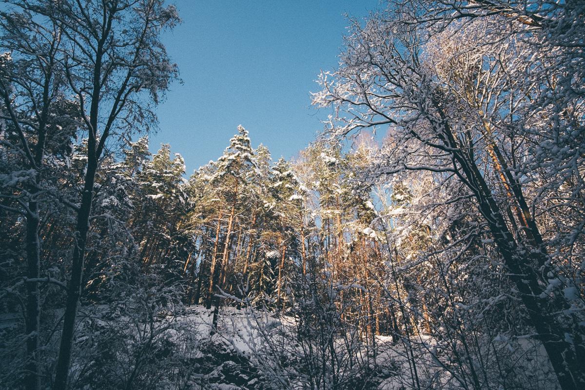 Eine Lichtung in der Dresdener Heide wird von der Sonne beleuchtet