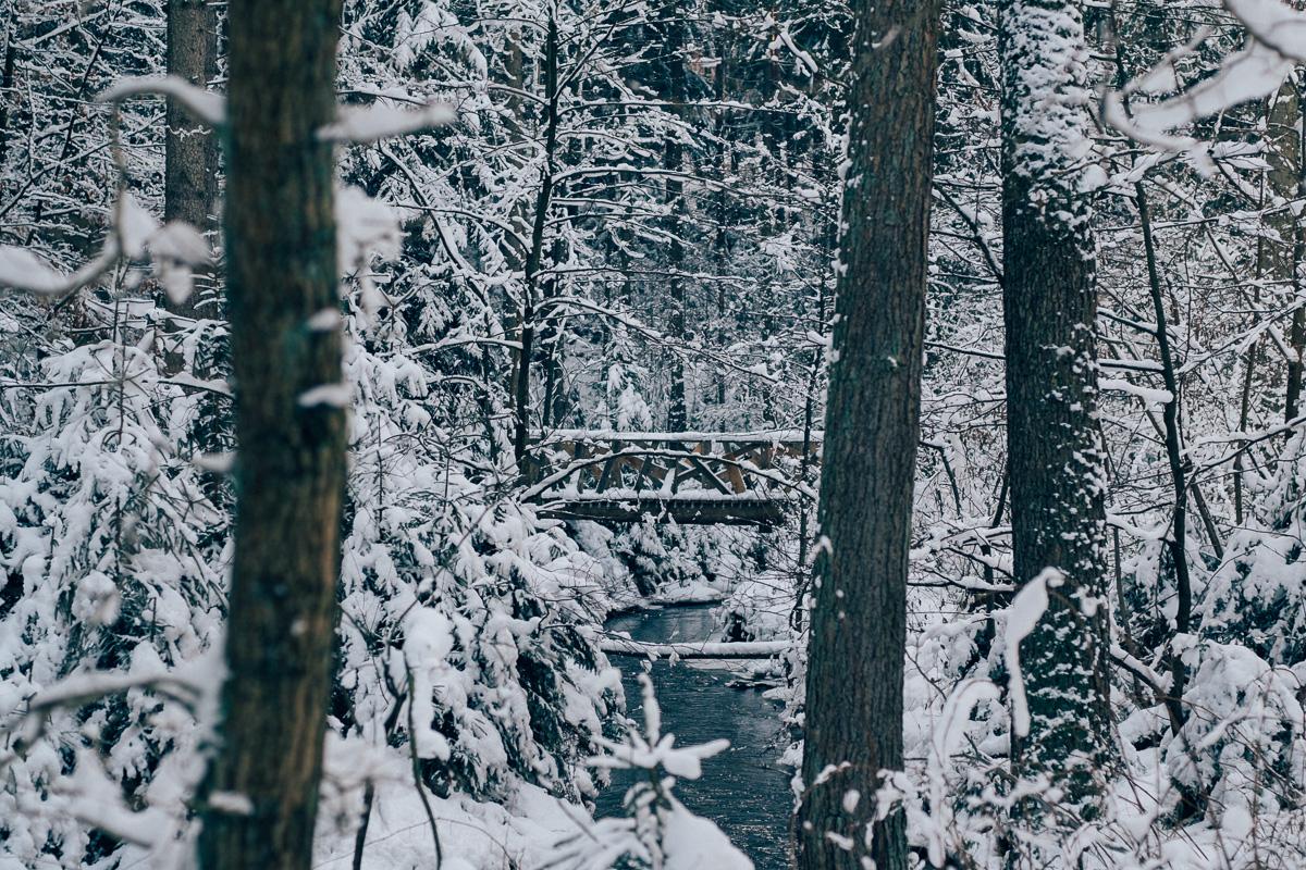 Eine zugeschneite Brücke über einen kleinen Bach in der Dresdener Heide
