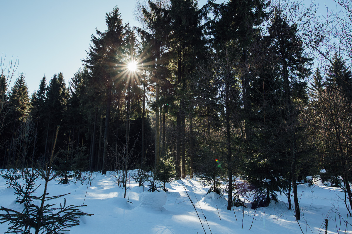 Sonne bricht durch die Bäume bei Altenberg