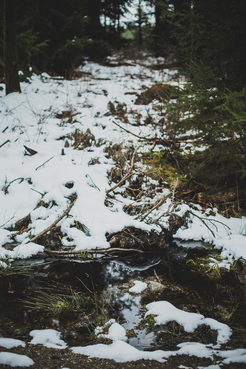 Schnee schmilzt im Tharandter Wald