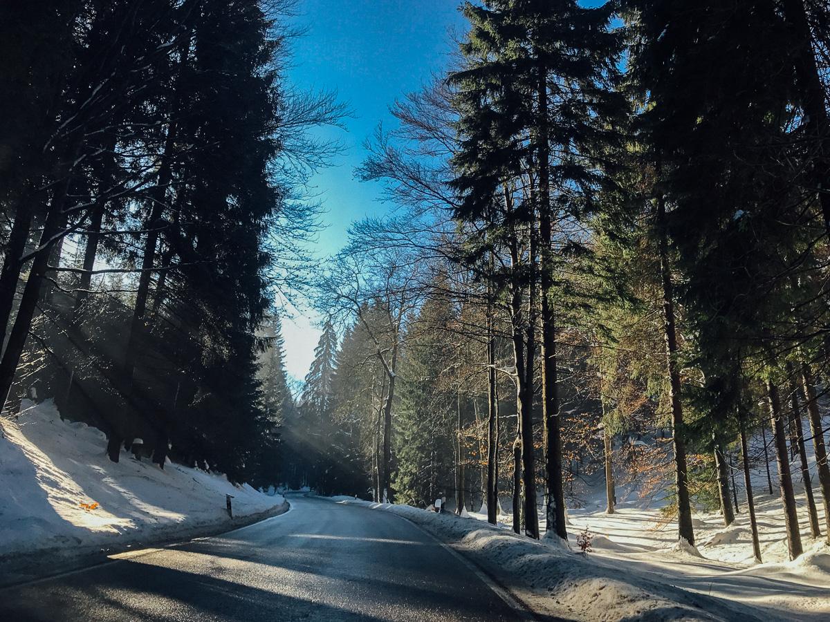 Sonne bricht durch die Bäume im verschneiten Wald bei Altenberg