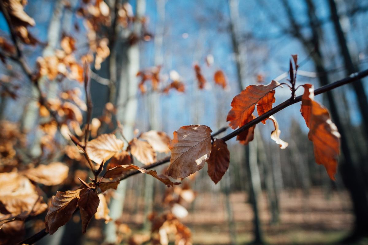 Laub hängt am Baum