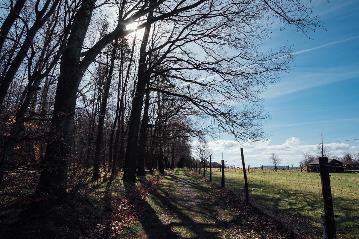 Feldweg am Rande eines Waldes