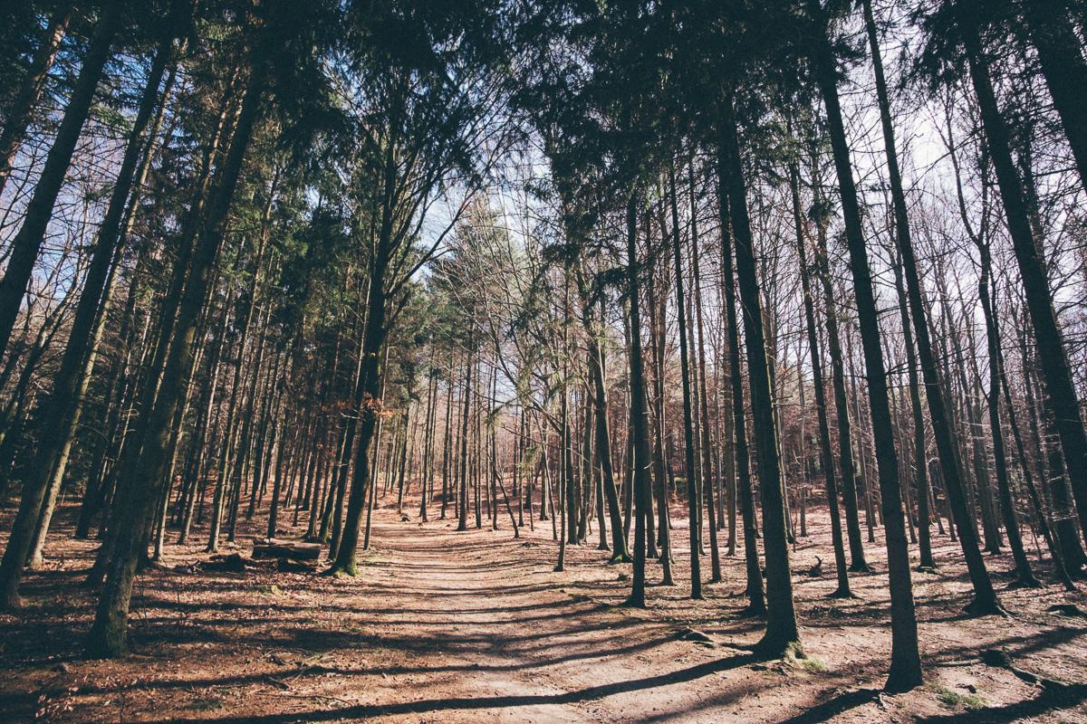 Die erste Frühlingssonne bricht durch einen Wald