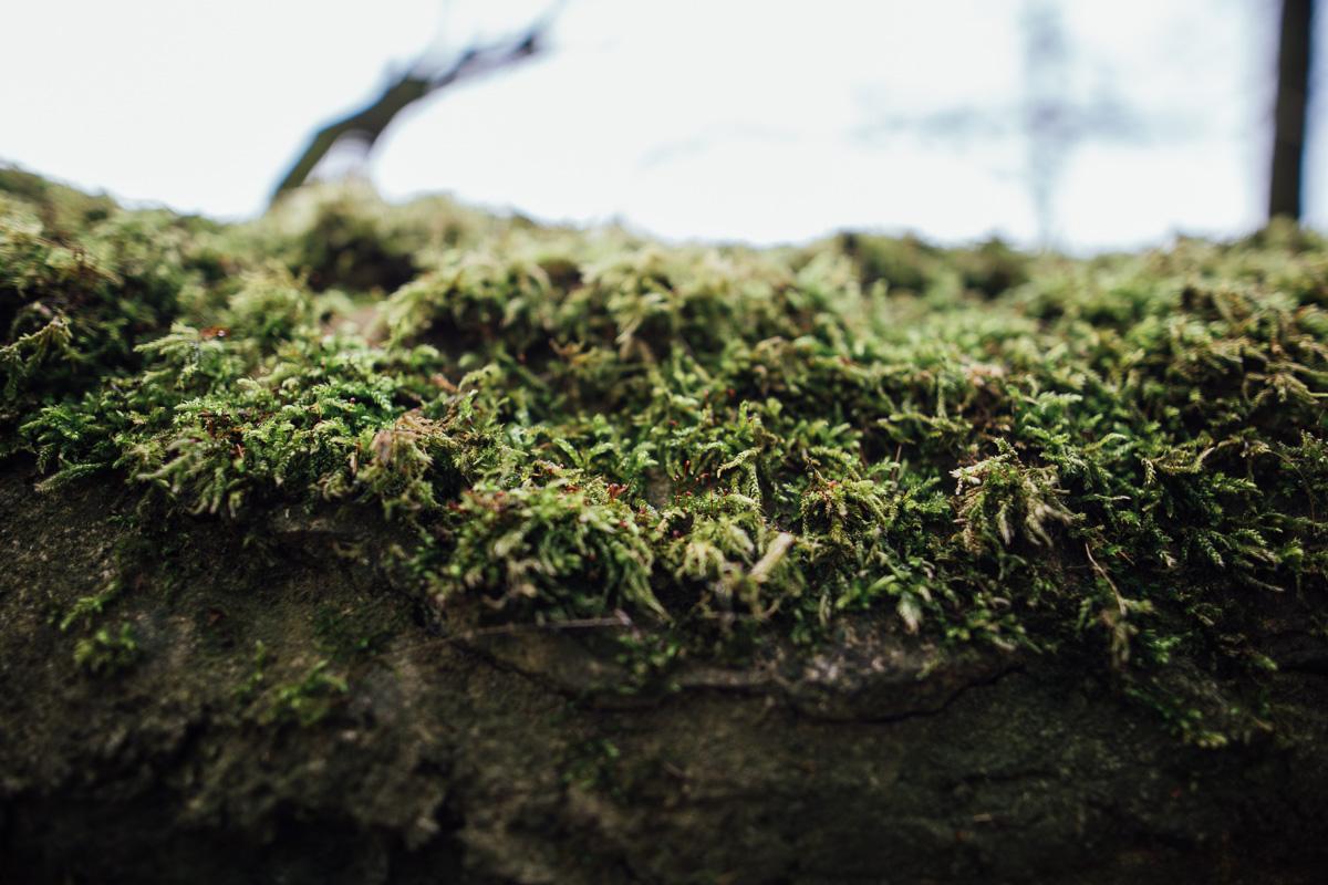 Moos bewächst eine Steinmauer im Wildgehege Moritzburg