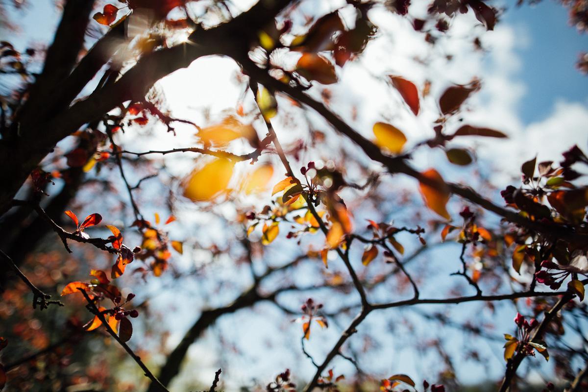 Bunte Blätter werden von der Sonne angeschienen