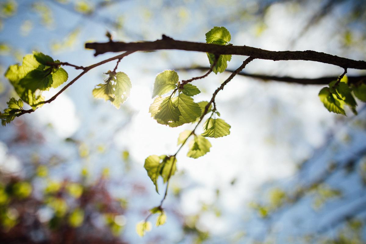 Sonnenschein bricht durch grüne Blätter im Wildgehege Moritzburg