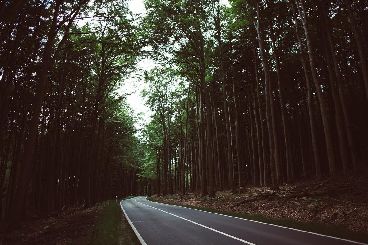 Eine Straße die durch einen hohen Wald führt