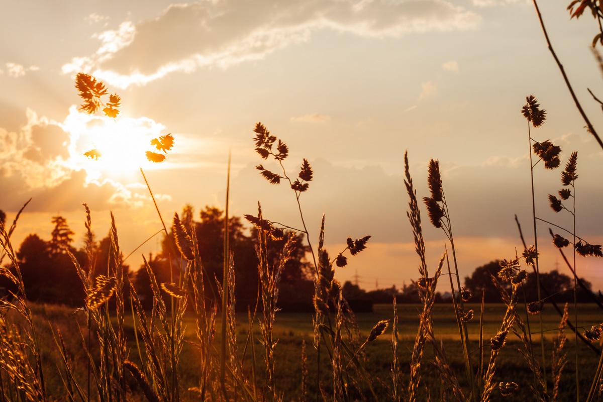 Am Rande eines Kornfeldes im Sonnenlicht