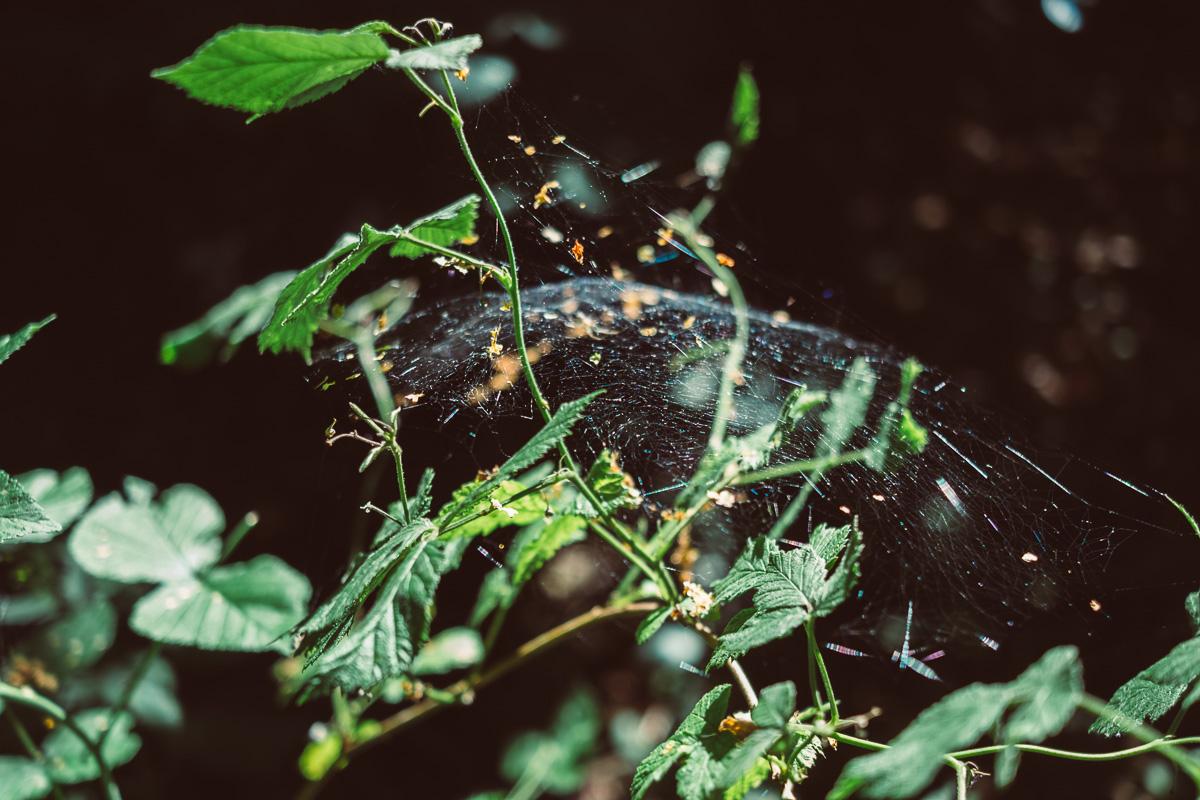 Ein Spinnennetz im Wald