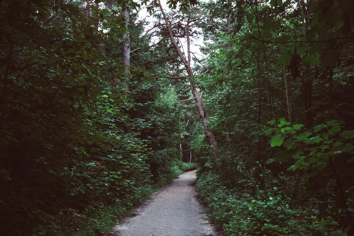 Ein Wald-Wanderweg