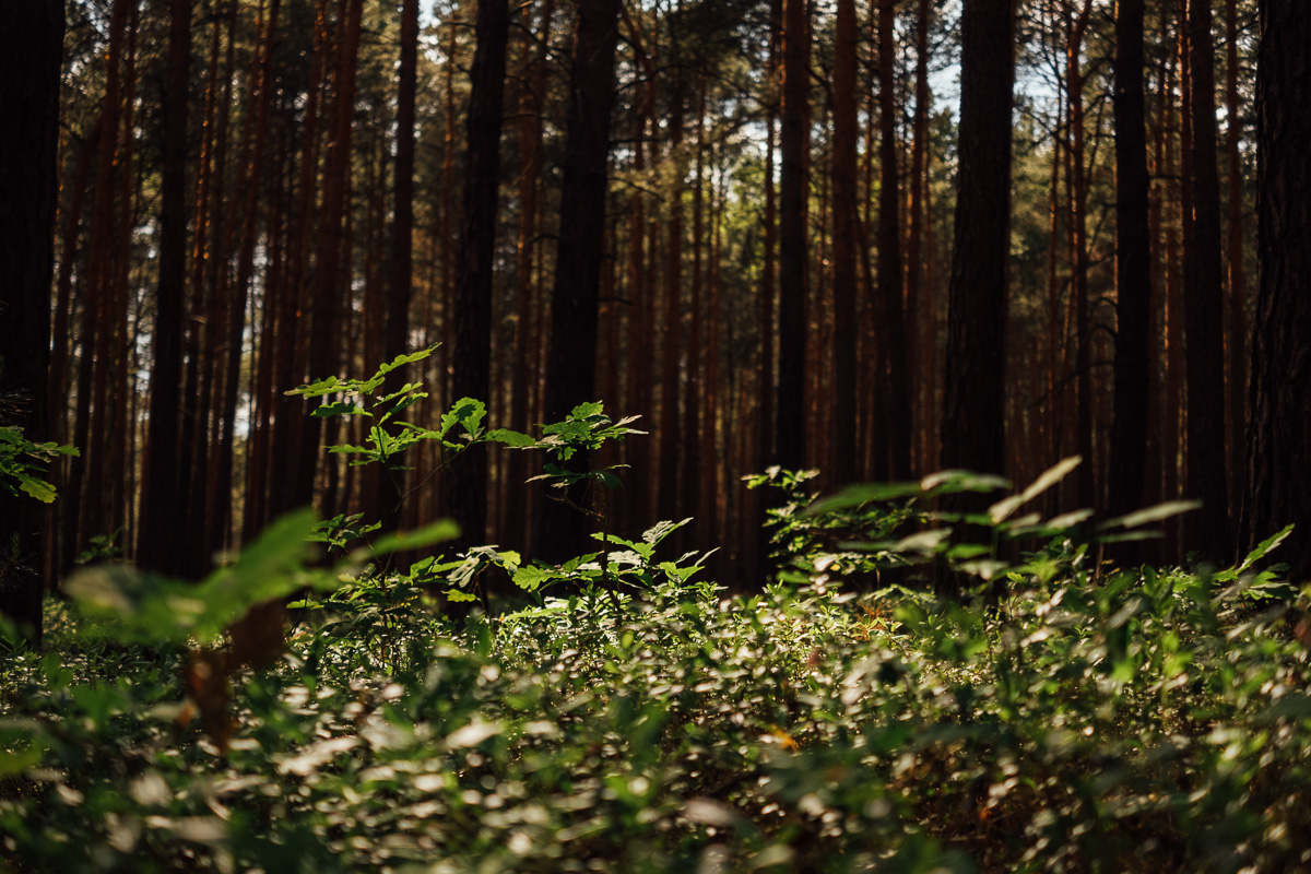 Unterholz im Wald
