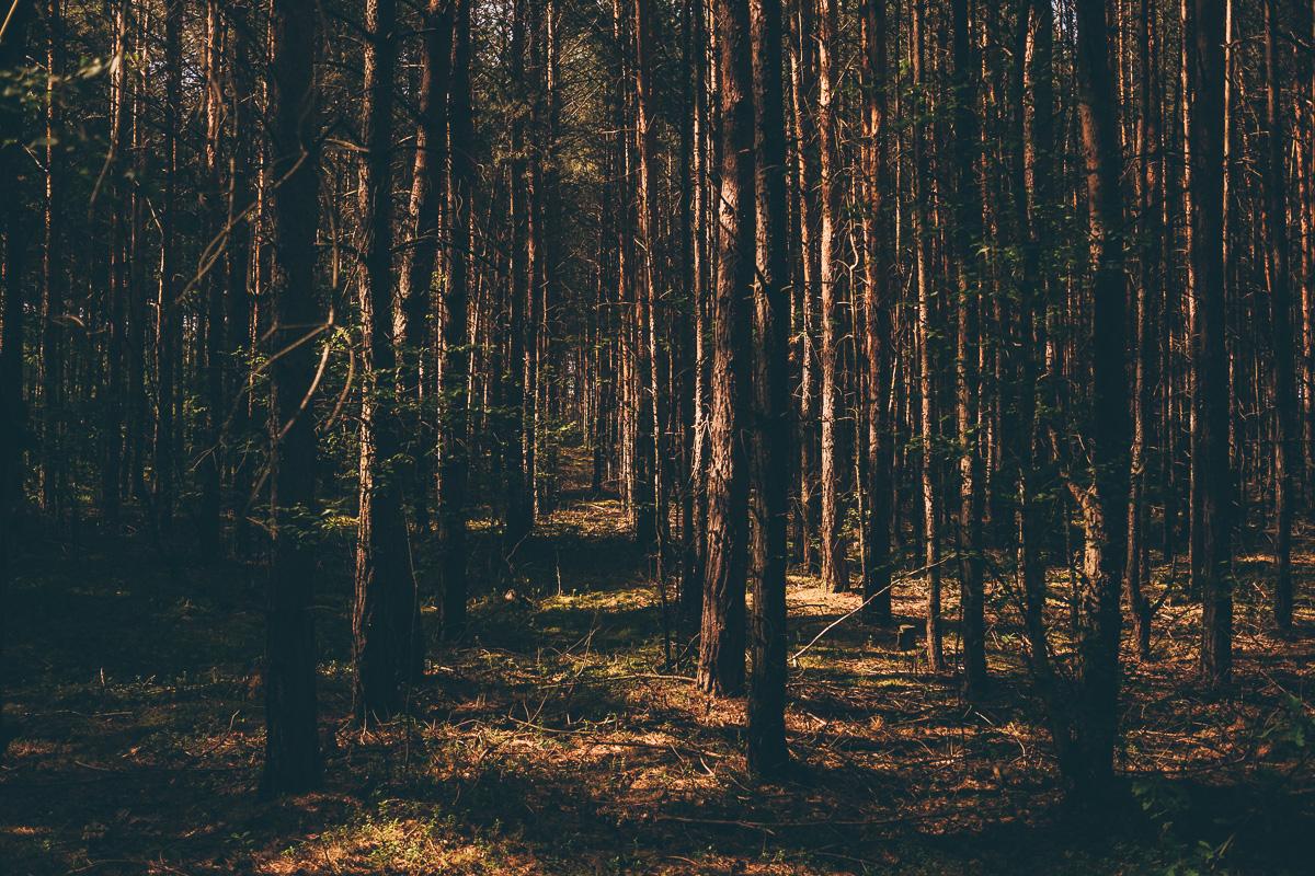 uriger und düsterer Wald nahe Ossling