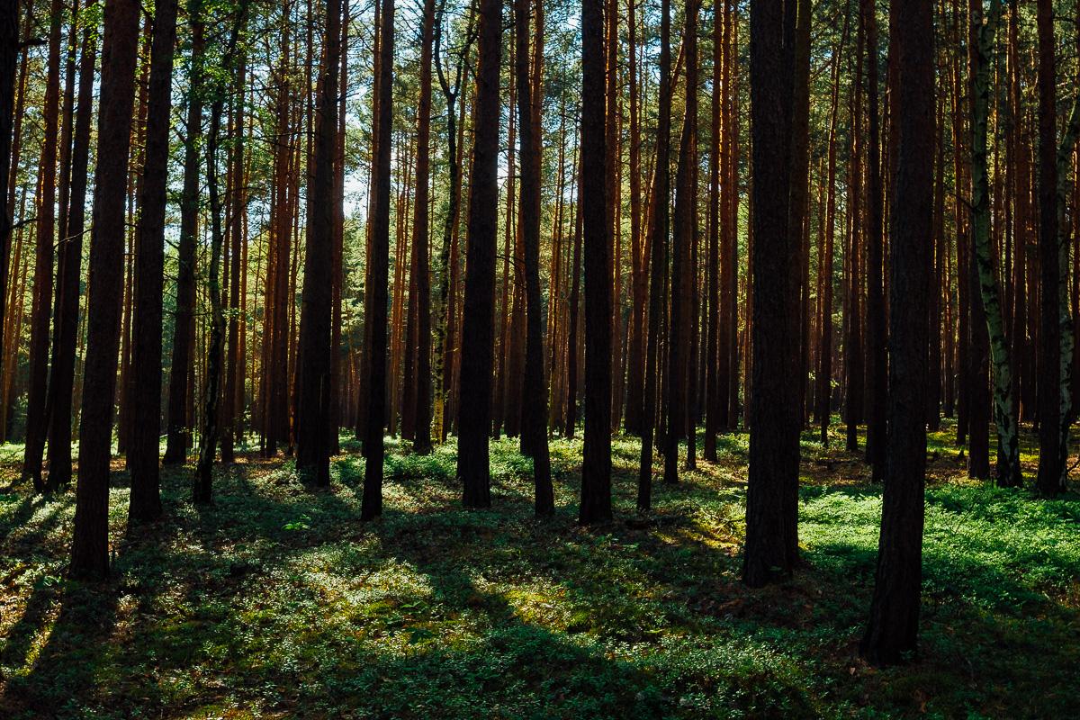 Wald bei Ossling
