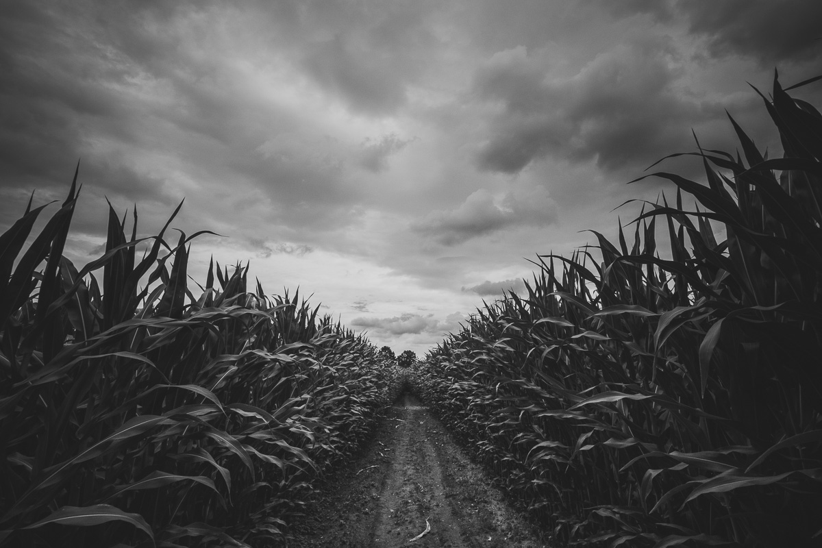 Dunkle Wolken über dem Maislabyrinth Benndorf