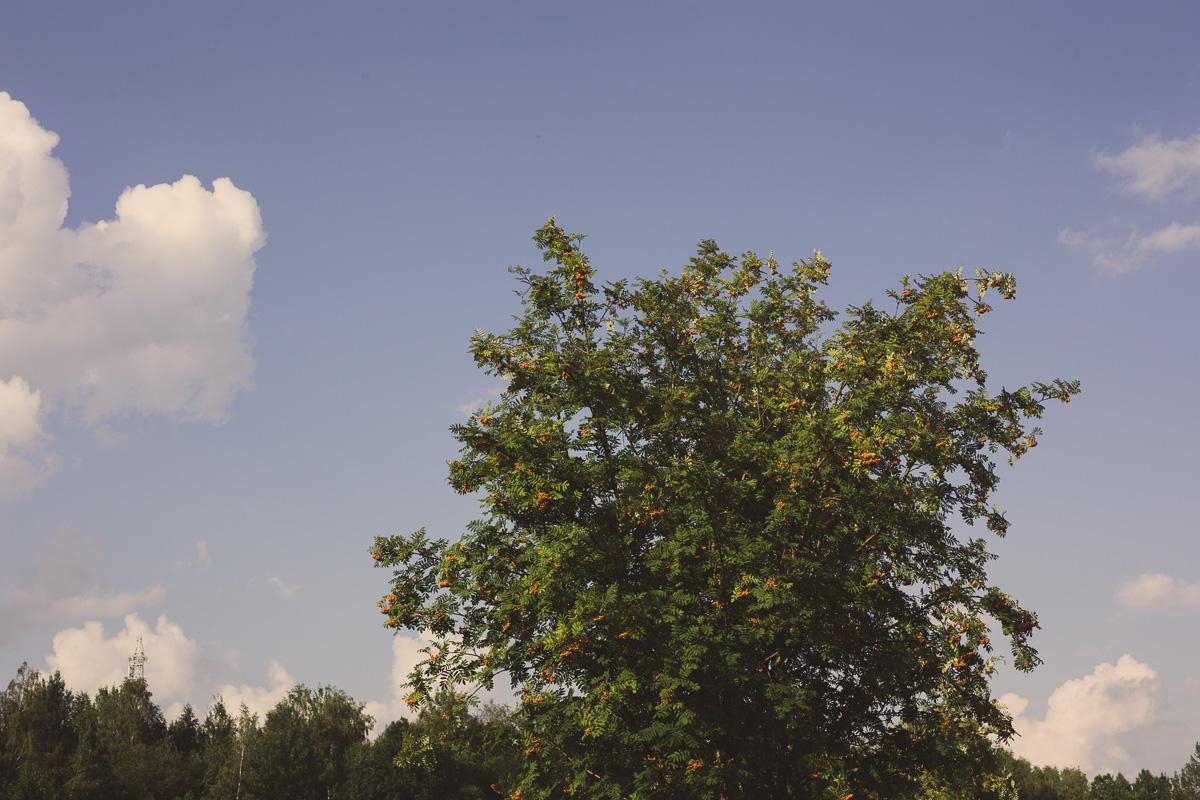 Baum vor blauem Himmel in Freiberg