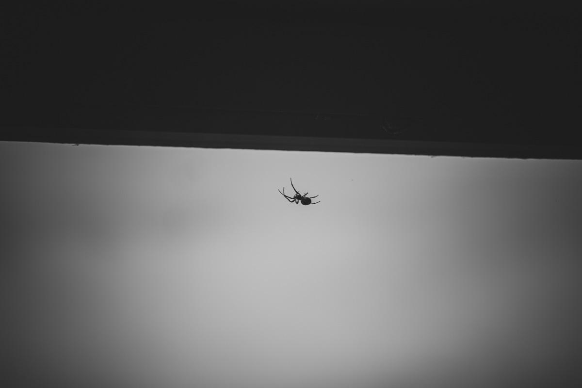 Eine Spinne am Hainer See bei Leipzig