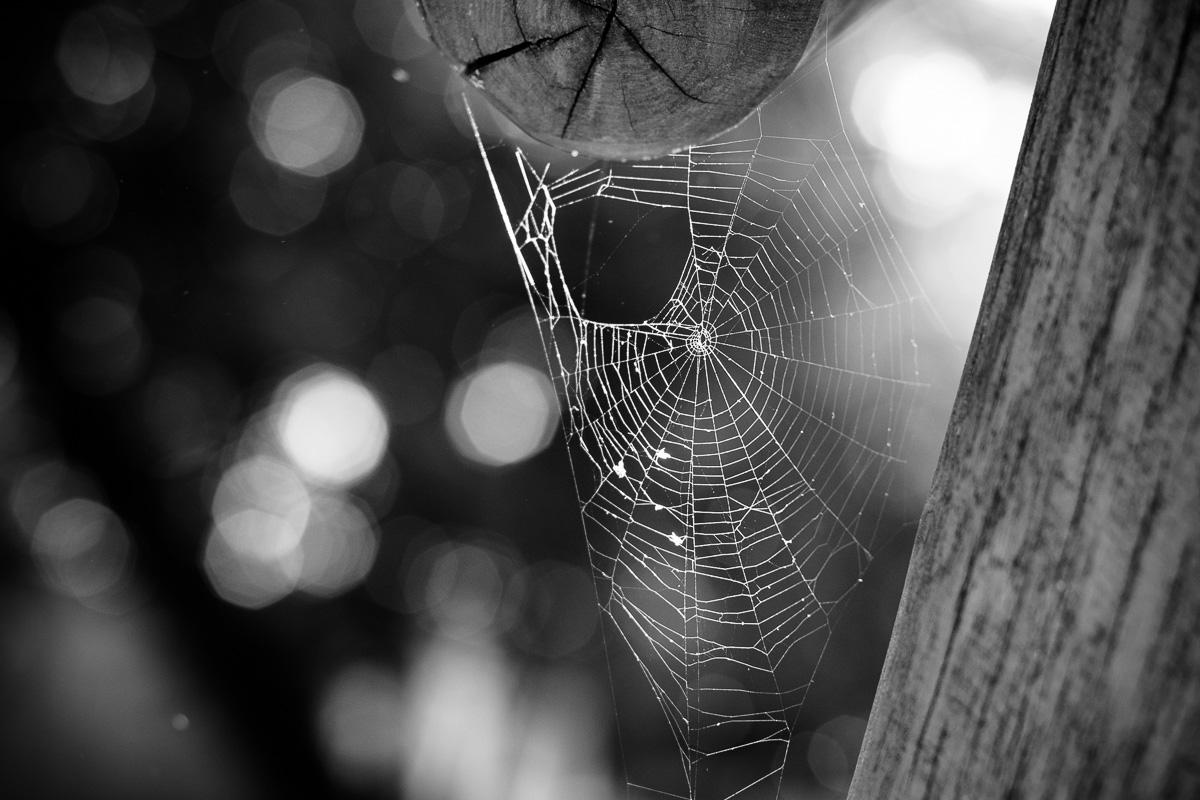 Ein Spinnennetz an einer Kinderschaukel